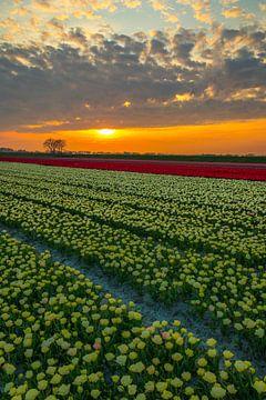 tulpen landschap van Peter Heins