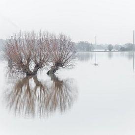 Pollard-Weiden in der Flussaue von Hilda Weges