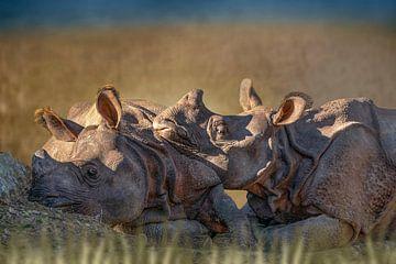 Nashorn in der Landschaft von D Meijer