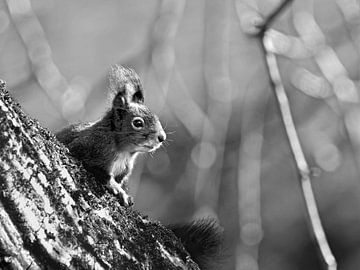 Zonnige eekhoorn van Maartje van Tilborg