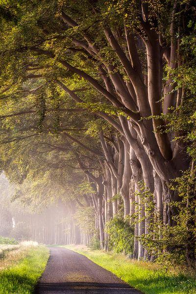 Bomenrij van Patrick Rodink