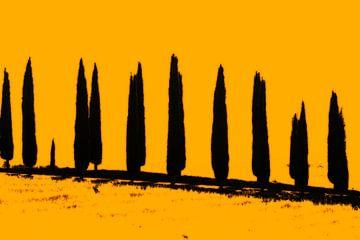 Silhouetten van cypressen, Toscane. van Rens Kromhout