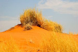 Sossusvlei, duintop Namibië