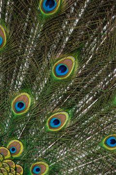Staart van een blauwe pauw van Renate Peppenster