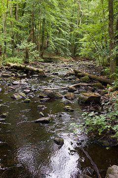 Natuur in Zweedse bossen van Kees van Dun