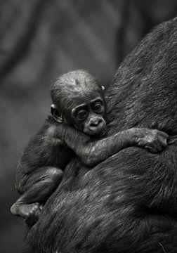 Schattige kleine gorilla jongen klampt zich vast aan moeder's jas. van Michael Semenov