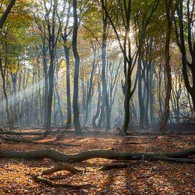 Lichtstrahlen- und Herbstfarben im Wald von Cor de Hamer