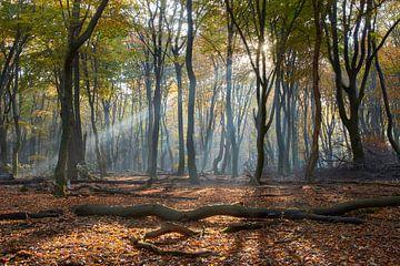 Lichtstraal in het Speulderbos van Cor de Hamer