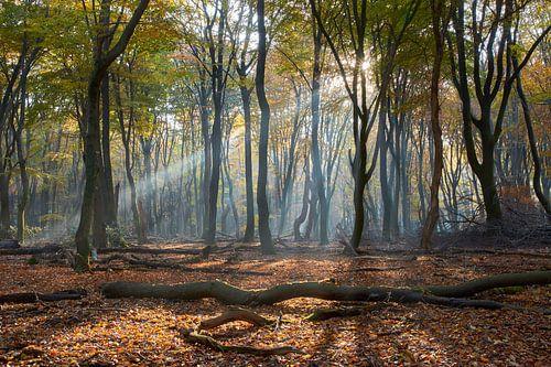 Lichtstrahlen- und Herbstfarben im Wald