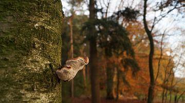 Paddenstoel aan een boom van Esmée Kiezebrink