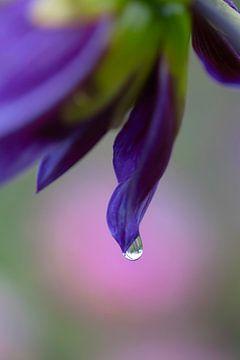 Nahaufnahme einer blau-violetten Iris (Schwertlilie) von Tot Kijk Fotografie: natuur aan de muur