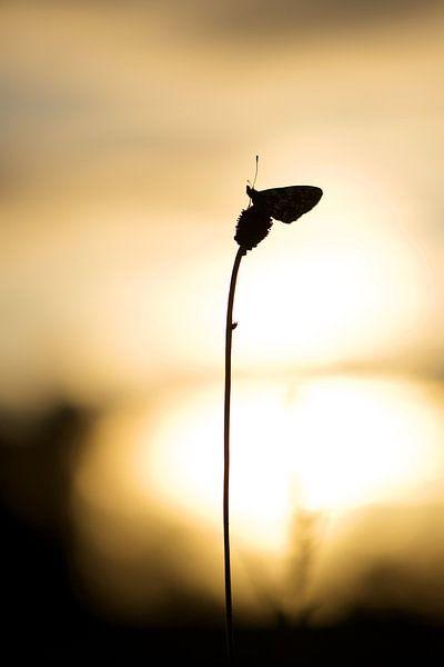 Zilveren Maan bij zonsopkomst van Erik Veldkamp
