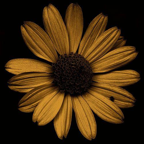 Golden Flower van crazy neopop