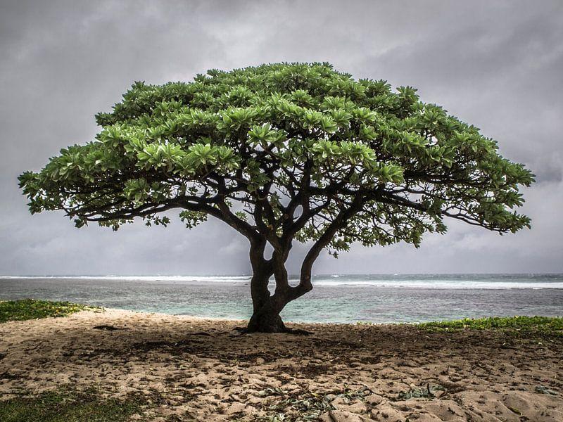 Lonely tree van Corali Evegroen