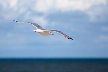 Vrij als een vogel van Evert Jan Kip