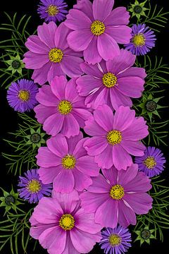 Cosmea Sensation bloemen van Elles Rijsdijk