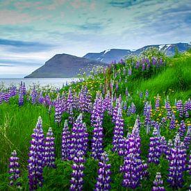 Zicht op het fjord met lupine op de voorgrond, IJsland van Rietje Bulthuis