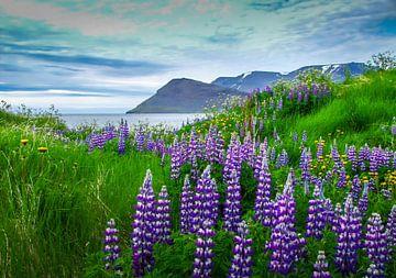 Blick auf den Fjord mit Lupine im Vordergrund, Island von Rietje Bulthuis