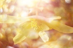 licht geel van