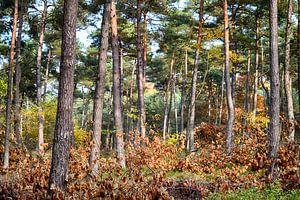Herfst in het bos van Erwin Klaasse