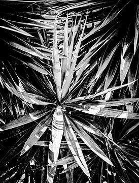 Yucca boom van MirjamCornelissen - Fotografie