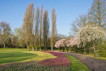 Het Park in Rotterdam in Bloei van Charlene van Koesveld