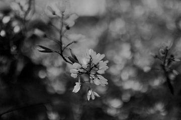 Blüte mit Detail schwarz-weiß von Sanne van Pinxten