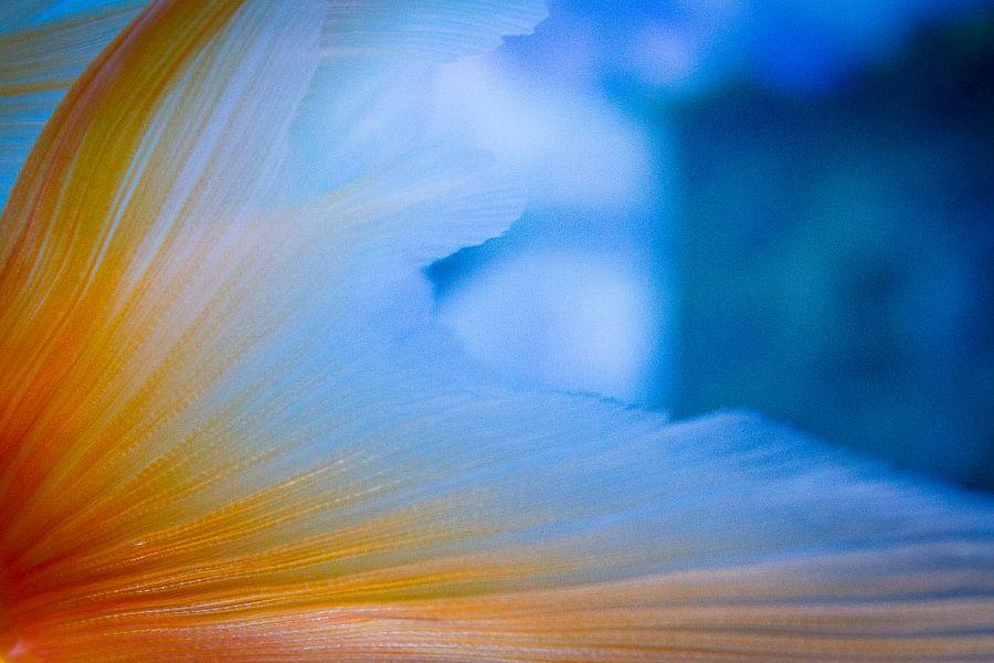 A touch of gold...fish van Kim Dalmeijer