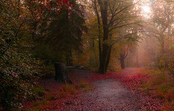 November rain bos van Claudia De Vries