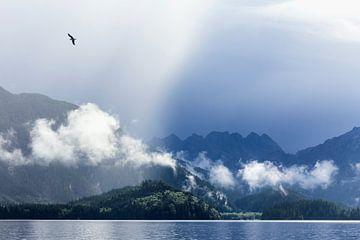 Vogel auf Haida Gwaii von Nathan Marcusse