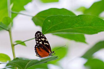 Schmetterling von Martina Weidner