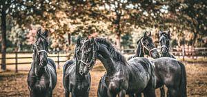 """Horses make a landscape look beautiful."" van William Klerx"