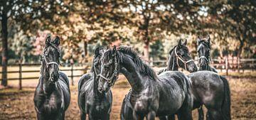 """""""Horses make a landscape look beautiful."""" von William Klerx"""