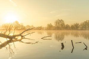 Landschap, opkomende zon tijdens mistige ochtend met boom in het water