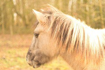 Konik-Pferd mit Vintage-Look von J..M de Jong-Jansen