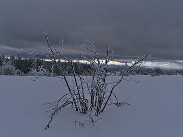 Enkele kale struik met bevroren takken in diepe sneeuw van Timon Schneider
