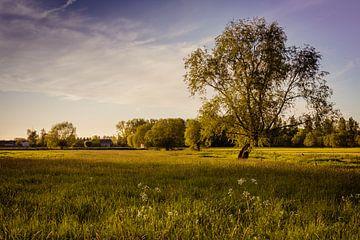Nature walk van Wim van D
