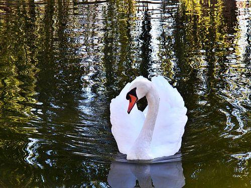 Swan Stare sur