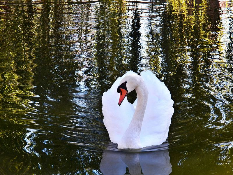 Swan Stare sur Christy Leigh