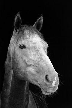 Portrait de cheval von Eric Dufour