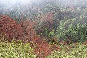 Forêt sur Thomas Heitz