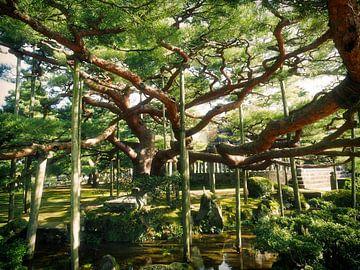 Ondersteunde boom sur Jasper H