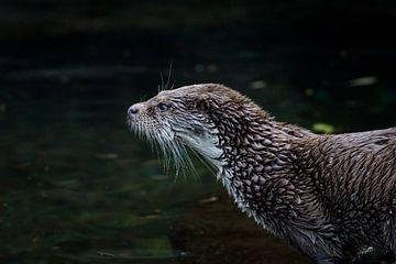 """""""Otter von Tanja Otten Fotografie"""
