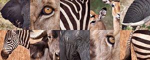 Afrika verzameling van