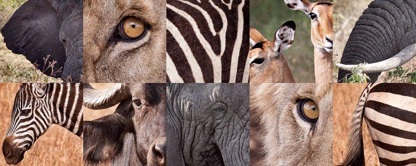 Afrika verzameling van Paul Jespers