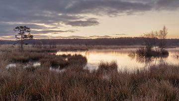 Nationalpark Dwingelderveld