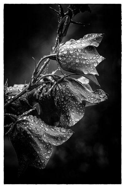 Blumen im Regen von Thilo Wagner