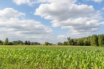 Ackerland auf Kerrebroek in Aalst von didier de borle