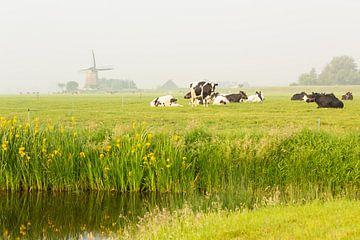Hollands polderlandschap van Marijke van Eijkeren