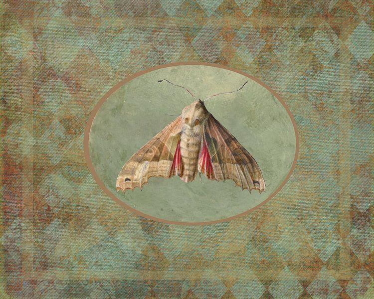 Nachtvlinder van Irene Hoekstra